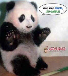 Raiola Gana, el panda no